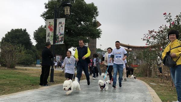 越溪张桥月季公园举办首届萌宠马拉松活动